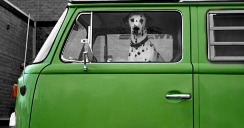 4-dalmation-and-bus